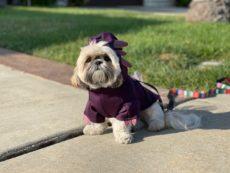 Dog wearing purple axolotl costume