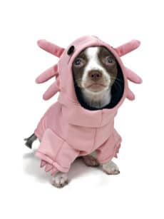 Dog in pink axolotl costume front